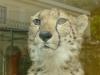 Shonbrunn-Zoo (68)