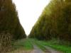 Strada di campagna tra Bovolone e Cerea