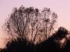 20121116-tramonto-5