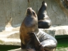 Shonbrunn-Zoo (34)