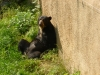 Shonbrunn-Zoo (58)