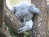 Shonbrunn-Zoo (81)