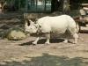 Shonbrunn-Zoo (9)