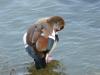 2011924-Borghetto-fauna del Mincio