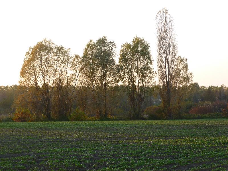 Cerea - Vista sul Brusà