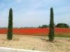 Concamarise - Campo di papaveri