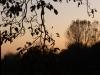 Cerea - Vista sul Brusà al tramonto