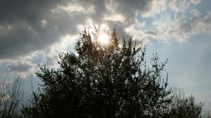 20120325-Cerea---Oasi-Brusà